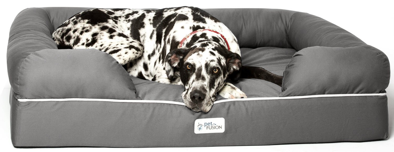 Best Mastiff Dog Beds of 2021 - Overview of Beds for Large Dogs