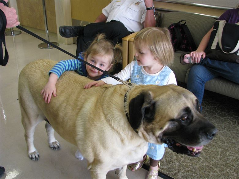 Mastiff Temperament - Are English Mastiffs Aggressive?