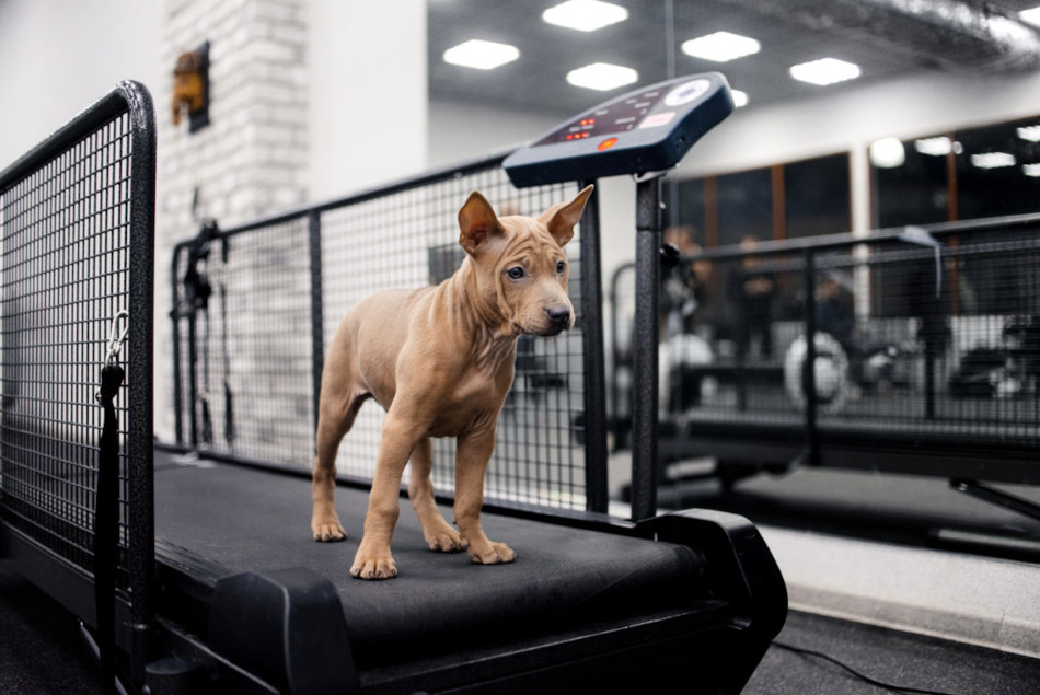 Teach-Your-Dog-Walk-Treadmill-feat